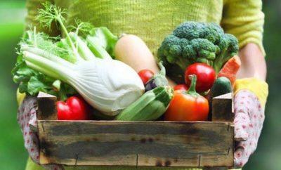 podzimní zelenina